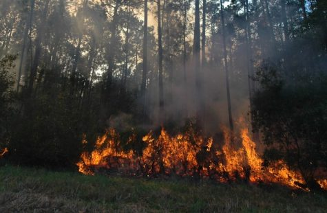 The Amazon Has Caught Fire